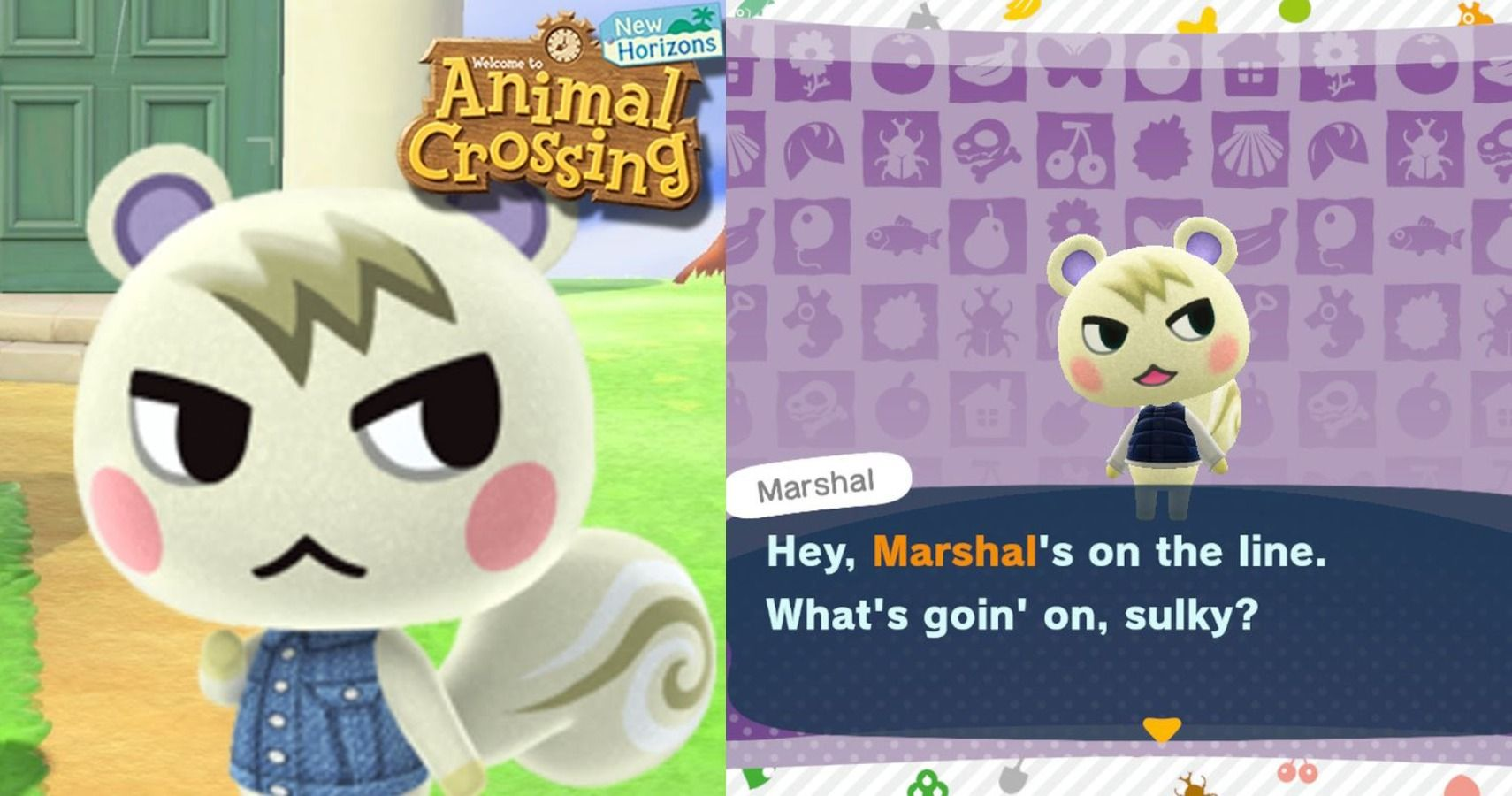 Animal Crossing 10 Hilarious Memes About Marshal Thegamer